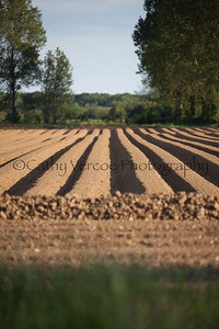 A tilled field with lines of furrowed earth