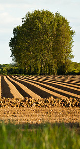 The shadows cast by the furrows of a tilled field
