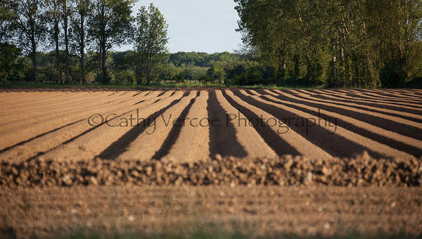 The lined furrows of a tilled field in Hampshire, England, UK