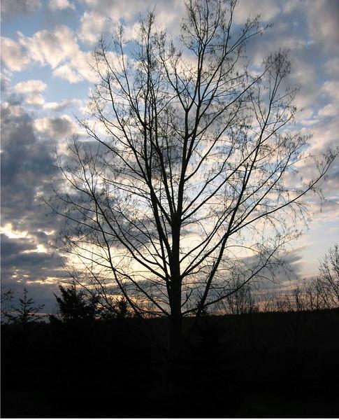 Autumn Sunset- Springville NY