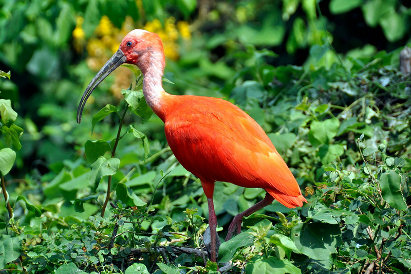 Tropical Bird- Buffalo Zoo