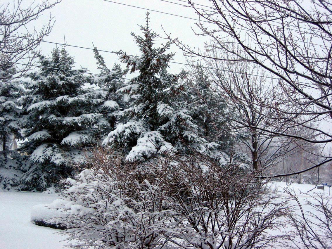 Winterscape- Springville NY