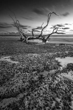 The Lone Driftwood