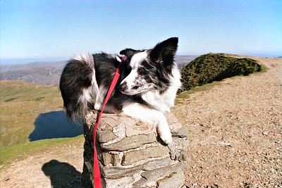 The Helvellyn Triangulation Station : Cassie on top