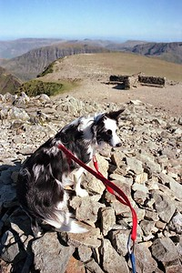 Helvellyn : Cassie On The Summit