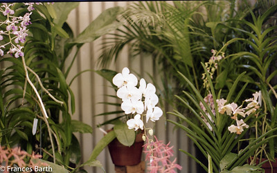 Orchids 1981