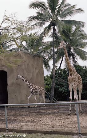 Honolulu zoo 1981