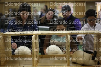2017 4-H STOCK SHOW