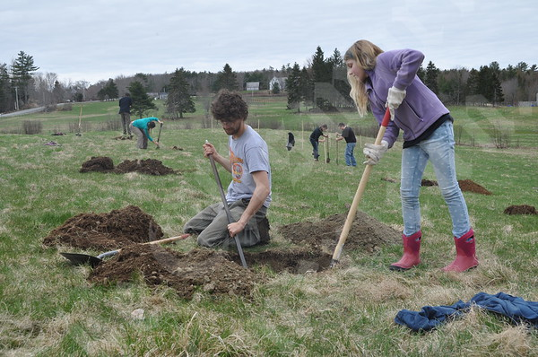 Apple Tree Planting
