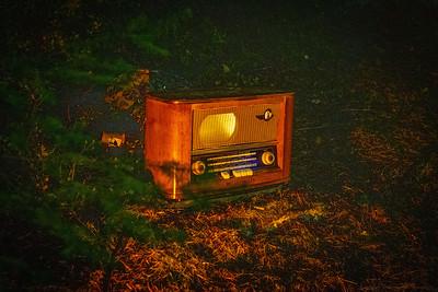Forest Radio