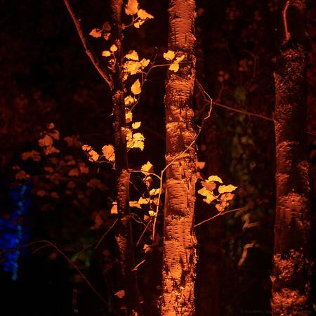 Midnight Autumn