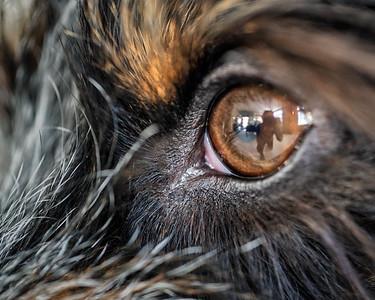 Canine Eyes