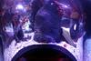SeaLife Aquarium- At The Eye in Orlando3