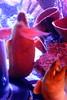 SeaLife Aquarium- At The Eye in Orlando6