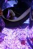 SeaLife Aquarium- At The Eye in Orlando12