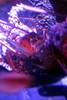 SeaLife Aquarium- At The Eye in Orlando5