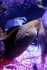 SeaLife Aquarium- At The Eye in Orlando11