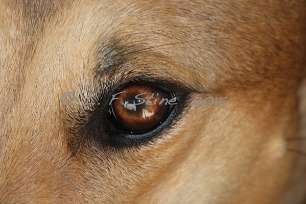 The Eyes of the Sighthound