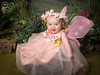 Amber - The Fairy Experience @ Spence Photography