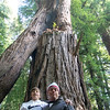 Wil & DT visitng Henry Cowell.  <br /> We call this group of redwoods - Kissing Cousins!