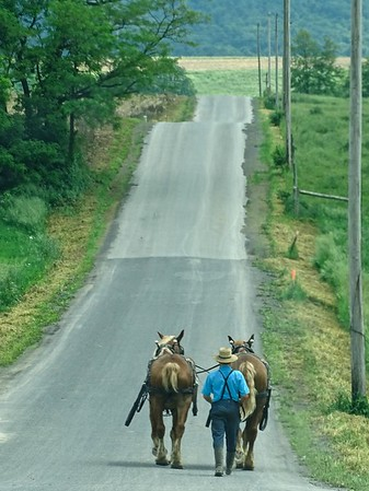 Bringing the horses in from the field in Spring Run, PA.