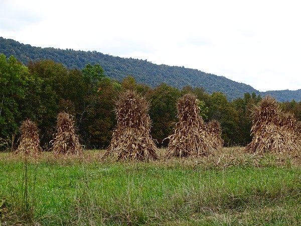 Corn shocks standing in an Amish farmer's field near Amberson, three days after the first day of Autumn, signal the change of season has come.