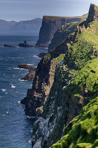 But the main attraction of Mykines lies in the steep cliffs on the opposite side which are the home to large numbers of pelagic birds