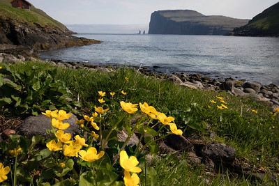 This is Tjornuvik at the far end of Streymoy Island and the two rocks sticking up at the far end are thought to be another witch who was trying to drag the Faroe Islands to Iceland.  They are called Risin og Kellingin and are hundreds of feet tall