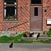 Wild cats on a farm