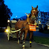 Several horses and cariages line up to take us to our exquisite dinner in Interlaken.