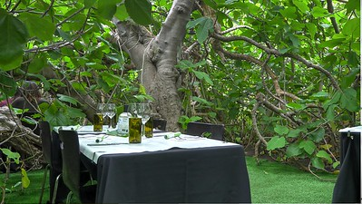 The Fig Tree2