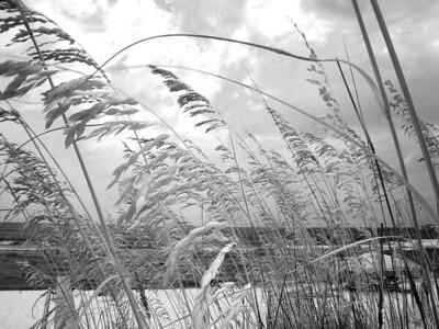 Dunes, 2013