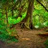 Bogachiel State Park, Washington