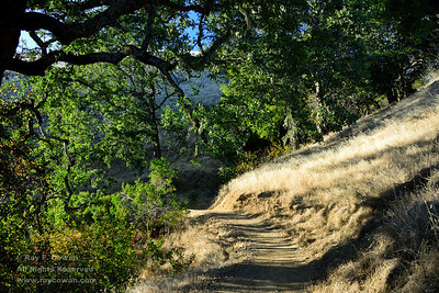 Late summer afternoon on Black Mountain, Coast Ranges, Santa Clara County, California