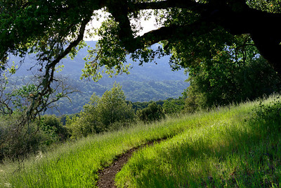 Wildflowers and vistas on the Franciscan and Page Mill Trails, Coast Ranges, Santa Clara County, California