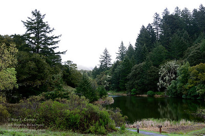 Spring rain at Horseshoe Lake, Coast ranges, Santa Clara County, California