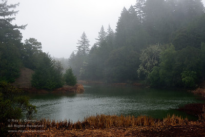 Winter storm at Horseshoe Lake, Coast ranges, Santa Clara County, California