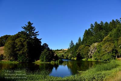 Early summer at Horseshoe Lake, Coast ranges, Santa Clara County, California