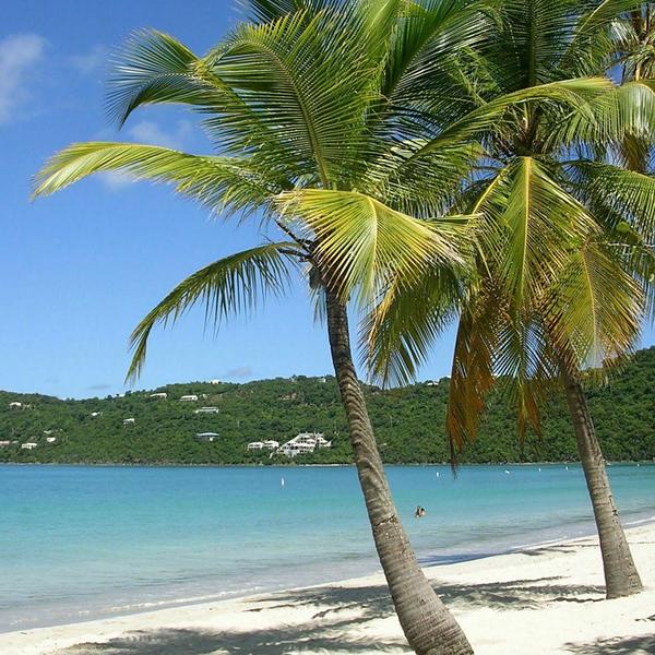 Hawaii -beach_palm_trees