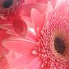 Nice Pink Flowers 720x720