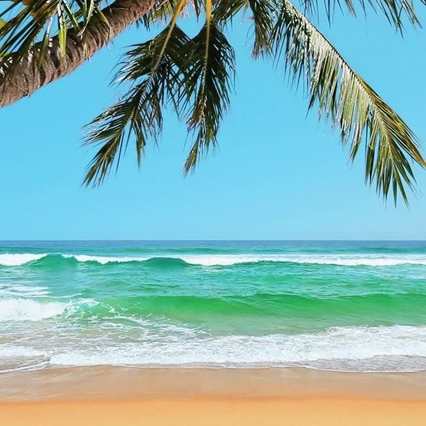 Beach Video Waves MP4
