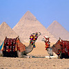 Travel Egypt pyramid with camels