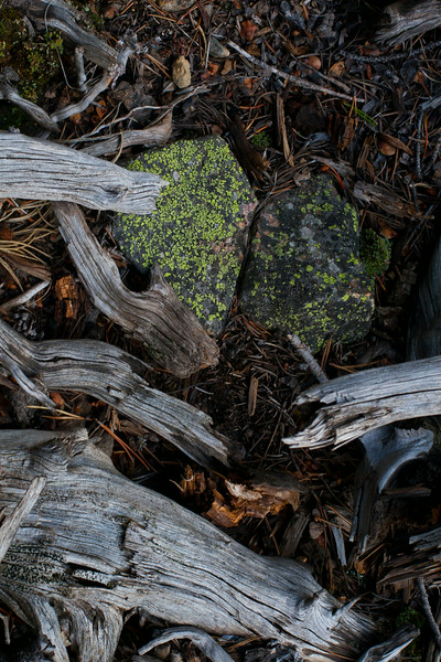 forest_floor_02
