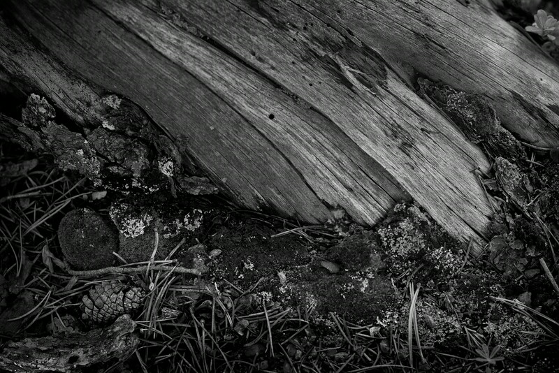 forest_floor_32