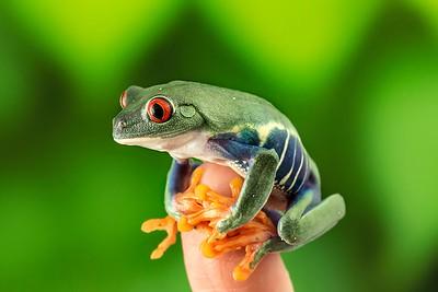 FrogsCh1-20__Frogscapes297_Cuchara_1921_091812_231653_5DM3L