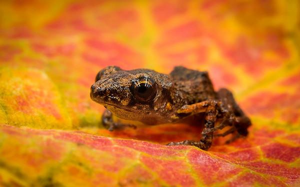 FrogsCh1-15__Frogscapes825_Cuchara_9890c_102917_162322_5DM3T
