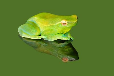 FrogsCh1-18__1225L_052814_144705_5DM3L
