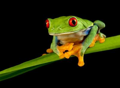 FrogsCh1-03__Frogscapes627b_Cuchara_4542L2_081512_202934_7DL