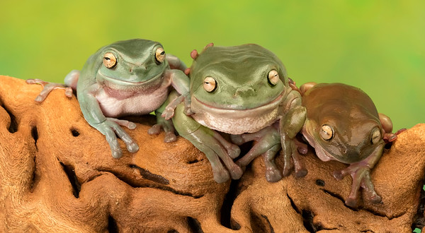 FrogsCh1-23__Frogscapes309_Cuchara_6738_090317_211218_SA7iiT