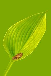 FrogsCh1-12__Frogscapes331_Cuchara_5224b_070813_132805_5DM3L